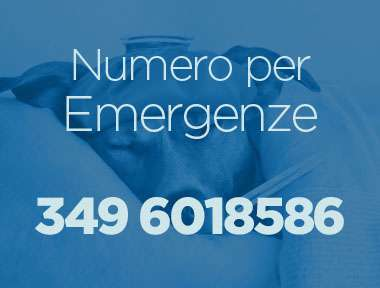 Emergenza Veterinaria Vicenza