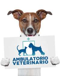 Clinica Veterinaria a Vicenza